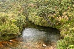 Horton plains , Belihul oya stream. Beautiful Belihul oya stream at horton plains national park , nuwara eliya , srilanka royalty free stock photos