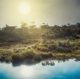 Horton Plains Lever de soleil images stock