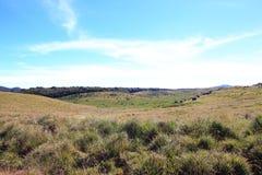 Horton Plains National Park images libres de droits
