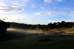 Horton Plains National Park pendant le matin Photographie stock libre de droits