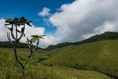 Horton Plains National Park Sri Lanka stock fotografie