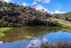 Horton Plains National Park, Sri Lanka image stock