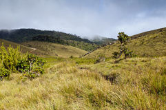Horton Plains National Park. Sri Lanka Stock Photography