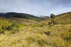 Horton Plains National Park. Sri Lanka Stock Photography