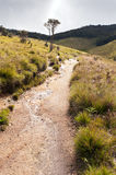 Horton Plains National Park. Sri Lanka Stock Photos
