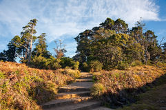 Horton plains in Sri Lanka at sunrise Royalty Free Stock Images
