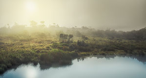 The Horton Plains. Sunrise Stock Images