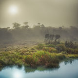 The Horton Plains. Sunrise Stock Photography