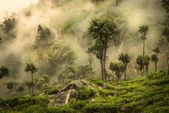 Hortons nivåer i Sri Lanka Arkivbild
