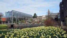 Hortus莱顿Botanicus  库存图片
