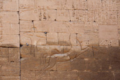 Horus寺庙 库存照片