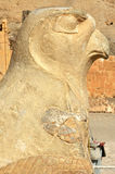 Horus. Statue of the Egyptian  God Horus in the early new kingdom mortuary temple of Queen Hatshepsut at Thebes in Egypt Stock Photo