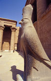 Horus Edfu temple. Granite statue of Horus (egyptian god) inside the Horus temple in Edfu, Egypt royalty free stock images