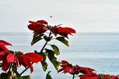 Horyzont nad morzem Obrazy Royalty Free