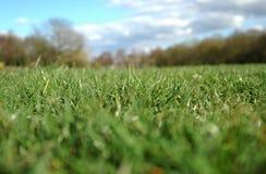 horyzont trawy. zdjęcie stock