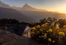 Horyzontalna fotografia Rybi ogonu szczyt Machapuchare podczas wschód słońca z kolorem żółtym kwitnie jako przedpole, himalaje fotografia royalty free