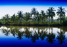 Horyzontalne wibrujące dramatyczne palmy z odbiciami z rzędu lądują Obraz Stock