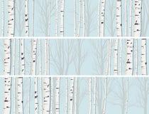 Horyzontalni sztandary brzoza bagażniki lasowi. Zdjęcia Stock
