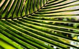 Horyzontalny żywy wibrujący zielony palmowego liścia bokeh tła backdr Obrazy Royalty Free