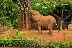 horyzontalny afrykański słoń Zdjęcia Royalty Free