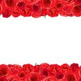 Horyzontalny bezszwowy tło z czerwonymi różami również zwrócić corel ilustracji wektora ilustracja wektor