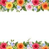 Horyzontalny bezszwowy tło z kolorowymi różami i frezją kwitnie również zwrócić corel ilustracji wektora ilustracji