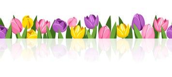 Horyzontalny bezszwowy tło z kolorowymi tulipanami royalty ilustracja