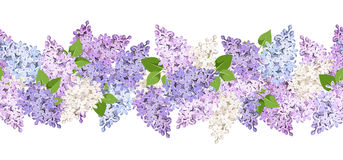 Horyzontalny bezszwowy tło z lilymi kwiatami również zwrócić corel ilustracji wektora ilustracja wektor