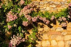 Horyzontalny pic pięcie roślina w drylującej ścianie Obraz Royalty Free