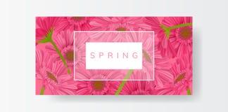 Horyzontalny ramowy sztandar z różowym gerbera stokrotki kwiatem ilustracja wektor