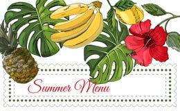 Horyzontalny szablon z zielonymi wielkimi monstera liśćmi, tropikalne owoc i czerwony poślubnik, kwitniemy royalty ilustracja