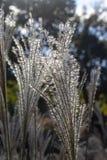 Horyzontalny tło - dekoracyjnej trawy płytkiej ostrości ostry szczegół w słońcu w przedpolu z bokeh tłem drzewa i niebo zdjęcia royalty free