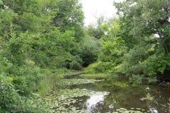 Horyzontalny widok laguna zdjęcia stock