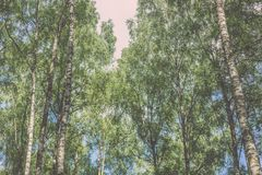 Horyzontalny wizerunek luksusowy wczesny wiosny ulistnienie - wibrujący zieleni sp fotografia stock