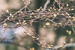 Horyzontalny wizerunek luksusowy wczesny wiosny ulistnienie - wibrujący zieleni sp obrazy royalty free