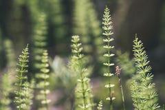Horyzontalny wizerunek luksusowy wczesny wiosny ulistnienie - wibrujący zieleni sp obraz royalty free