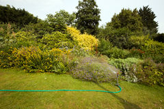 Hose in garden  Royalty Free Stock Images