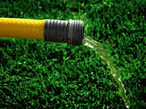 Hose on Green Grass Stock Image