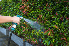 Hose nozzle spraying water. On plants outdoors royalty free stock image