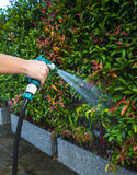 Hose nozzle spraying water. On plants outdoors stock photography