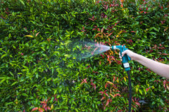 Hose nozzle spraying water. On plants outdoors royalty free stock images