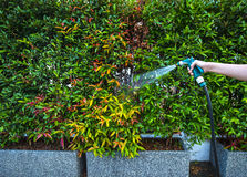 Hose nozzle spraying water. On plants outdoors stock photo
