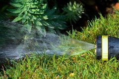 Hose pipe sprinkler watering garden lawn and flower bed royalty free stock images