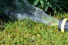 Hose pipe sprinkler watering garden lawn and flower bed stock photo