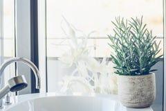 Hose plant succulent Senecio serpens or Blue Chalksticks in bathroom, close up stock images