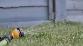 Hose sprinkler on lawn. Hose on grass sprinkler on lawn stock footage