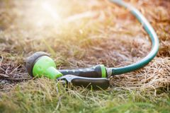 Hose for watering on the lawn, Sunny stock photos