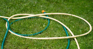 Hose for watering of lawn water Stock Photography