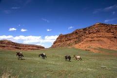 Hoses Near the Mesa Stock Image