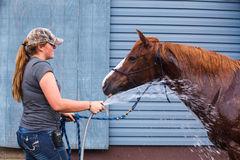 Hosing Off a Horse Stock Image